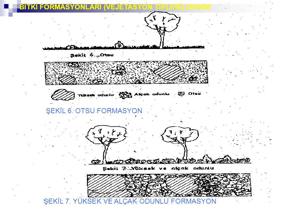 ŞEKİL 7. YÜKSEK VE ALÇAK ODUNLU FORMASYON ŞEKİL 6. OTSU FORMASYON BİTKİ FORMASYONLARI (VEJETASYON TİPLERİ) DEVAM