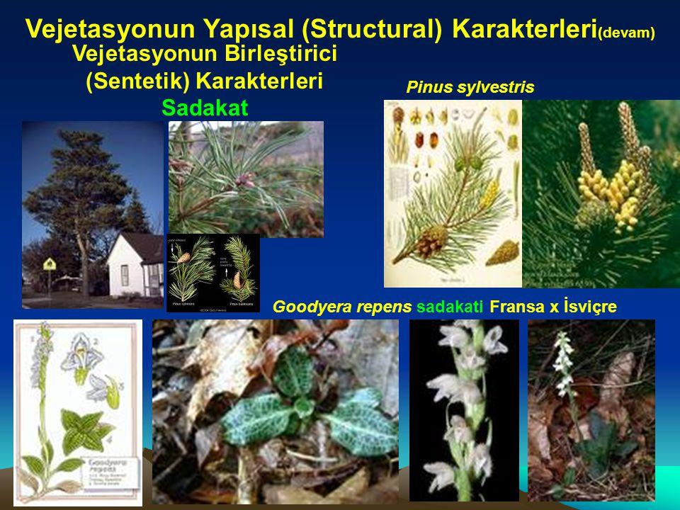 Vejetasyonun Yapısal (Structural) Karakterleri (devam) Vejetasyonun Birleştirici (Sentetik) Karakterleri Sadakat Pinus sylvestris Goodyera repens sada