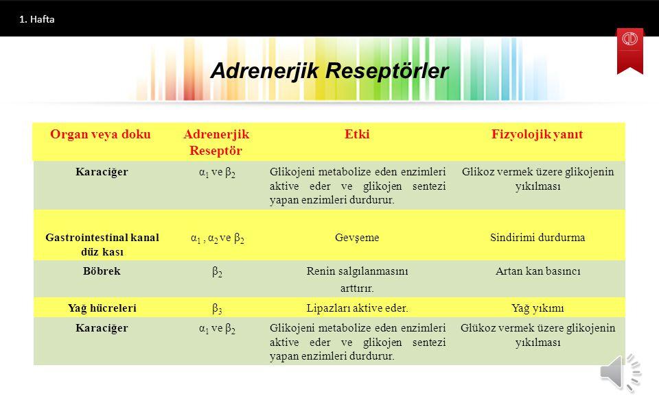 Adrenerjik Reseptörler 1. Hafta Organ veya dokuAdrenerjik Reseptör EtkiFizyolojik yanıt Kalp kasıβ1β1 Kas kasılmasıArtmış kalp hızı ve gücü Bronş düz