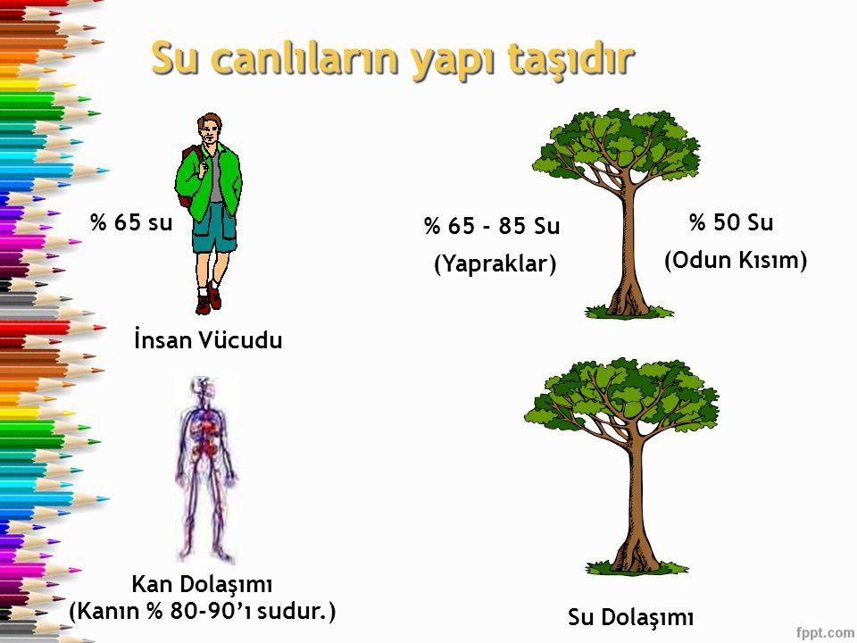 Su canlıların yapı taşıdır İnsan Vücudu % 65 su% 50 Su (Odun Kısım) % 65 - 85 Su (Yapraklar) Kan Dolaşımı (Kanın % 80-90'ı sudur.) Su Dolaşımı