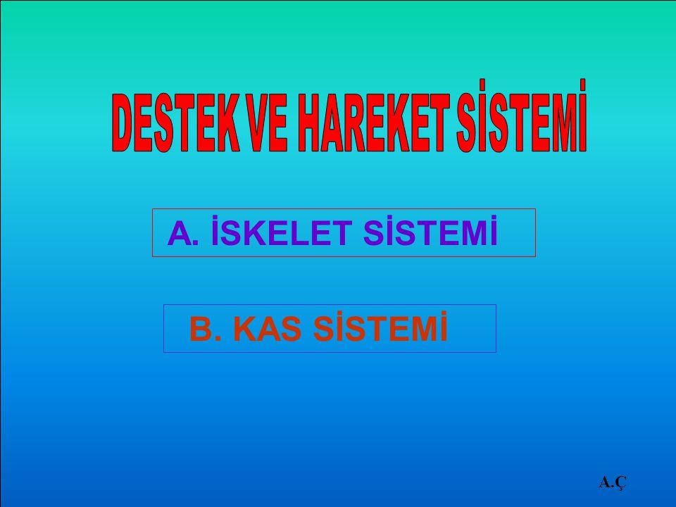 DERMEDERME İLKÖĞRETİM A.Ç