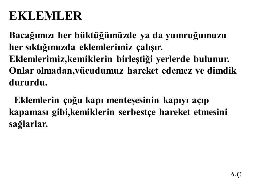 A.Ç EKLEM ÇEŞİTLERİ 1.OYNAR ( HAREKETLİ) EKLEMLER 2.