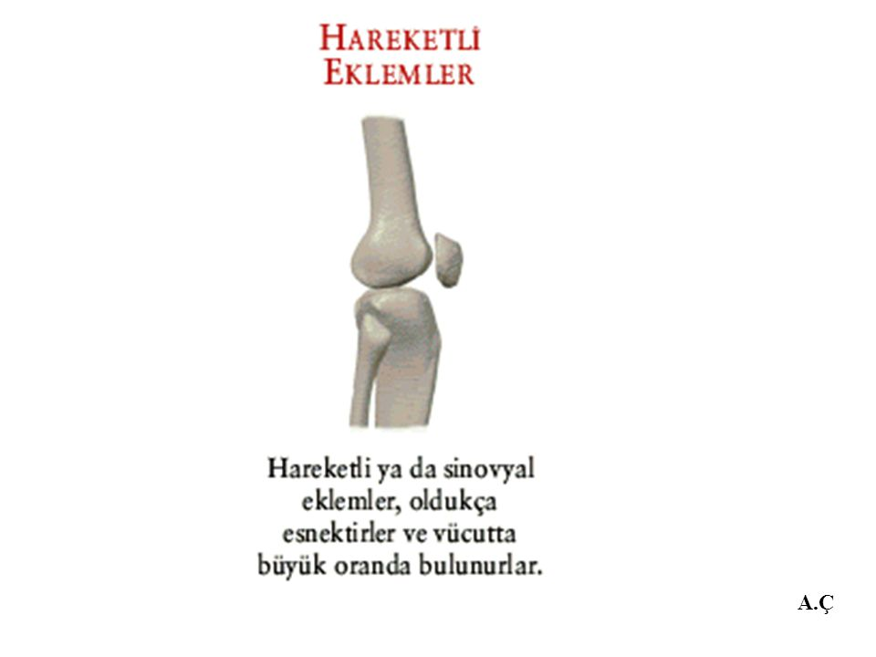 4.Kafa tasını oluşturan kemikler arasındaki eklem ne tür eklemdir.