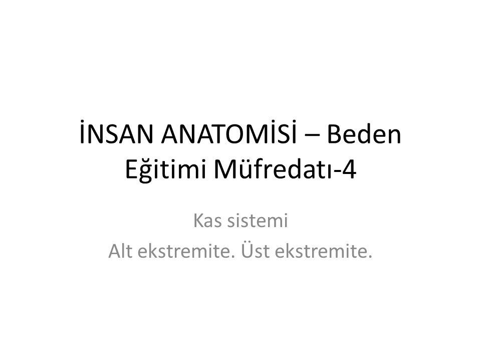 İNSAN ANATOMİSİ – Beden Eğitimi Müfredatı-4 Kas sistemi Alt ekstremite. Üst ekstremite.