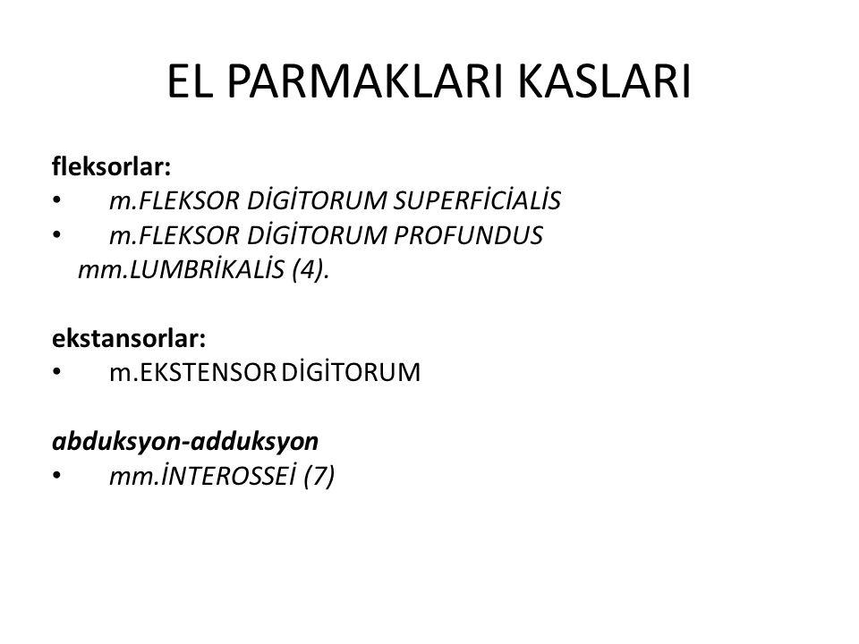 EL PARMAKLARI KASLARI fleksorlar: m.FLEKSOR DİGİTORUM SUPERFİCİALİS m.FLEKSOR DİGİTORUM PROFUNDUS mm.LUMBRİKALİS (4).