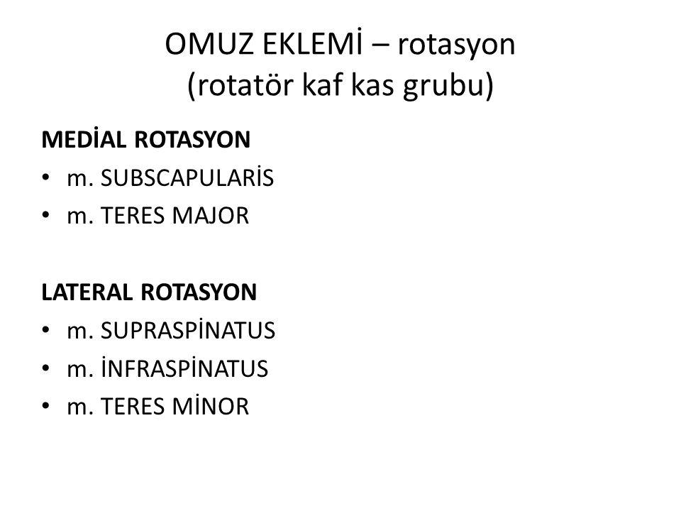 OMUZ EKLEMİ – rotasyon (rotatör kaf kas grubu) MEDİAL ROTASYON m.
