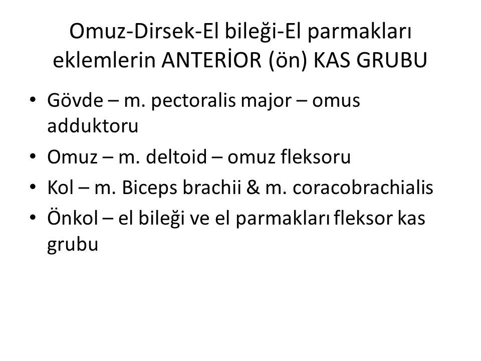 Omuz-Dirsek-El bileği-El parmakları eklemlerin ANTERİOR (ön) KAS GRUBU Gövde – m. pectoralis major – omus adduktoru Omuz – m. deltoid – omuz fleksoru