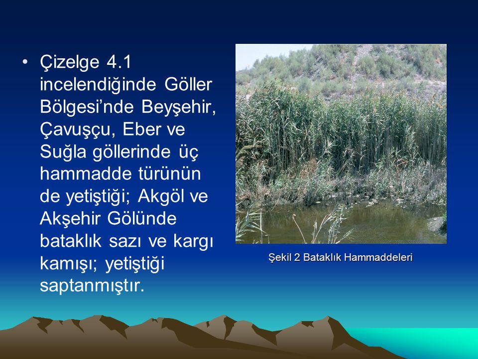 Şekil 2 Bataklık Hammaddeleri Çizelge 4.1 incelendiğinde Göller Bölgesi'nde Beyşehir, Çavuşçu, Eber ve Suğla göllerinde üç hammadde türünün de yetişti