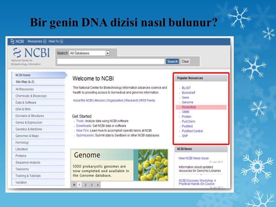 Bir genin DNA dizisi nasıl bulunur?