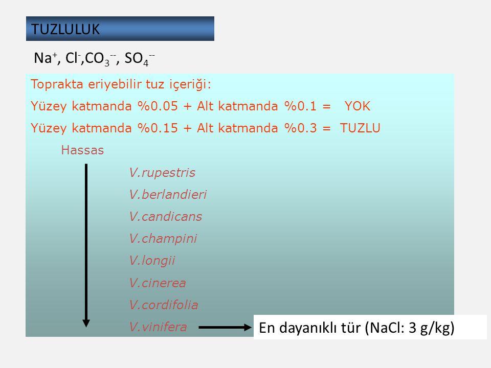 TUZLULUK Toprakta eriyebilir tuz içeriği: Yüzey katmanda %0.05 + Alt katmanda %0.1 = YOK Yüzey katmanda %0.15 + Alt katmanda %0.3 = TUZLU Hassas V.rup