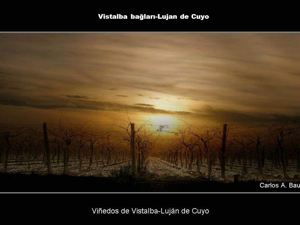 Vistalba bağları-Lujan de Cuyo