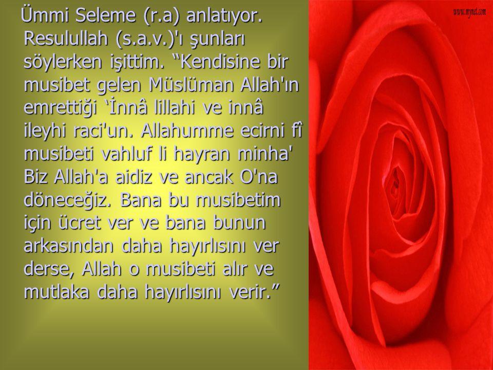 """. Ümmi Seleme (r.a) anlatıyor. Resulullah (s.a.v.)'ı şunları söylerken işittim. """"Kendisine bir musibet gelen Müslüman Allah'ın emrettiği 'İnnâ lillahi"""