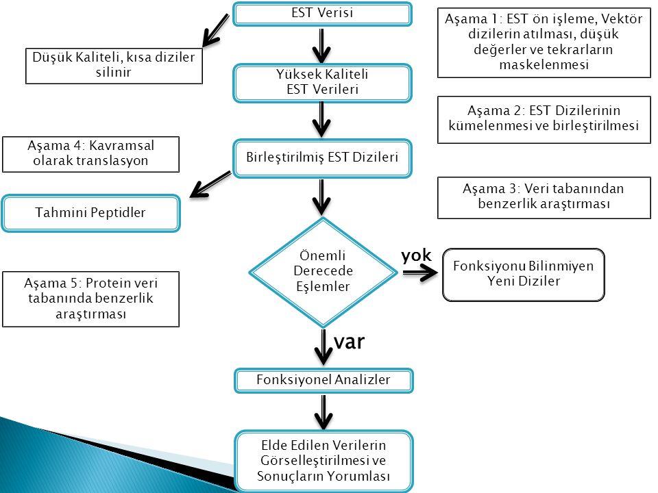 EST Verisi Yüksek Kaliteli EST Verileri Birleştirilmiş EST Dizileri Önemli Derecede Eşlemler Fonksiyonu Bilinmiyen Yeni Diziler yok Fonksiyonel Analiz