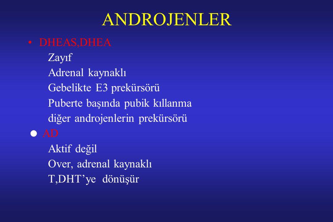 ANDROJENLER DHEAS,DHEA Zayıf Adrenal kaynaklı Gebelikte E3 prekürsörü Puberte başında pubik kıllanma diğer androjenlerin prekürsörü  AD Aktif değil O