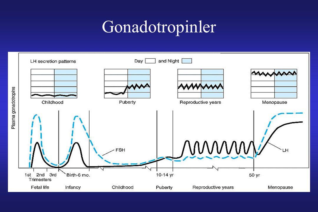 Gonadotropinler