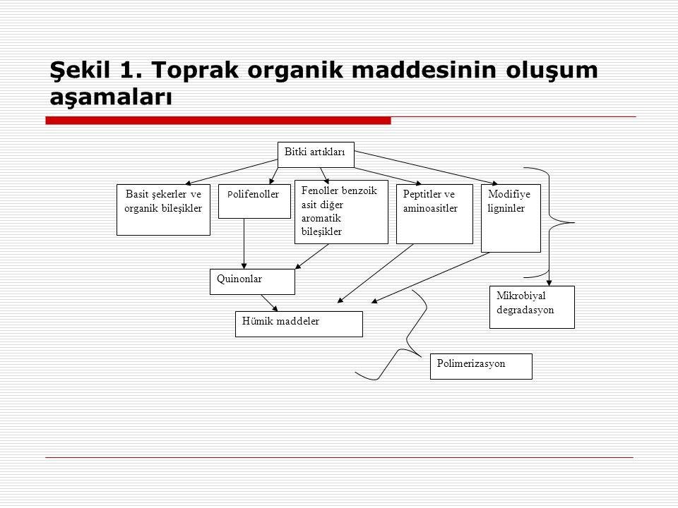 Şekil 1. Toprak organik maddesinin oluşum aşamaları Bitki artıkları Basit şekerler ve organik bileşikler P olifenoller Fenoller benzoik asit diğer aro