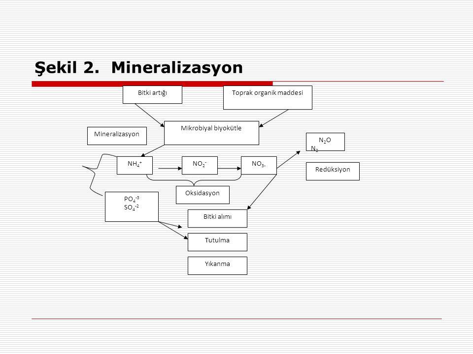 Şekil 2. Mineralizasyon Bitki artığıToprak organik maddesi Mikrobiyal biyokütle Mineralizasyon NH 4 + NO 2 - NO 3- Oksidasyon N2ON2N2ON2 Redüksiyon PO