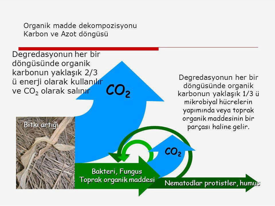 Organik madde dekompozisyonu Karbon ve Azot döngüsü Degredasyonun her bir döngüsünde organik karbonun yaklaşık 2/3 ü enerji olarak kullanılır ve CO 2 olarak salınır Bakteri, Fungus Toprak organik maddesi Bakteri, Fungus Toprak organik maddesi Nematodlar protistler, humus CO 2 Bitki artığı Degredasyonun her bir döngüsünde organik karbonun yaklaşık 1/3 ü mikrobiyal hücrelerin yapımında veya toprak organik maddesinin bir parçası haline gelir.
