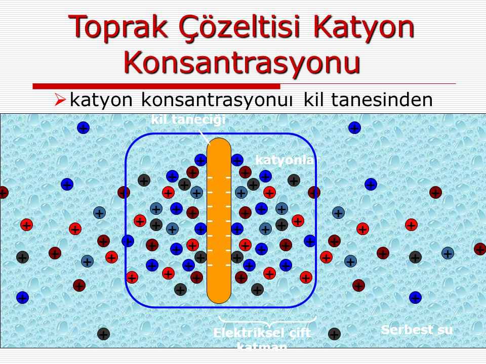 Toprak Çözeltisi Katyon Konsantrasyonu  katyon konsantrasyonuı kil tanesinden uzaklaştıkça azalır + ++ + + + + + + + + + + + + + + + + + + + + + + +