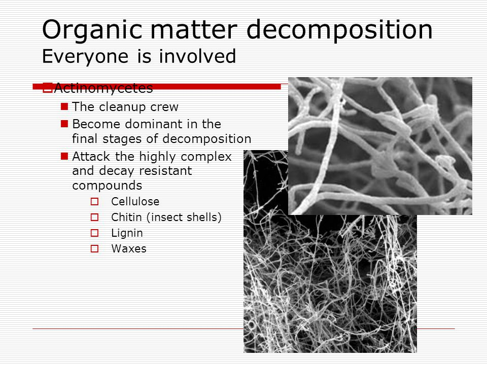 Organic matter decomposition Everyone is involved  Actinomycetes The cleanup crew Become dominant in the final stages of decomposition Attack the hig