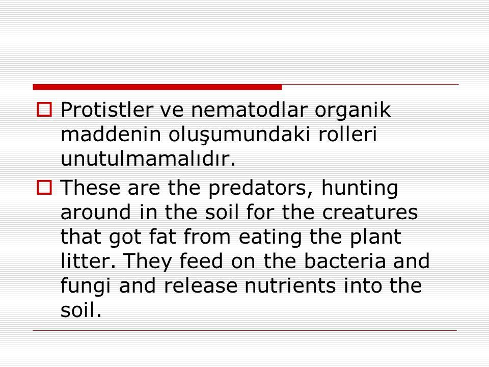  Protistler ve nematodlar organik maddenin oluşumundaki rolleri unutulmamalıdır.  These are the predators, hunting around in the soil for the creatu