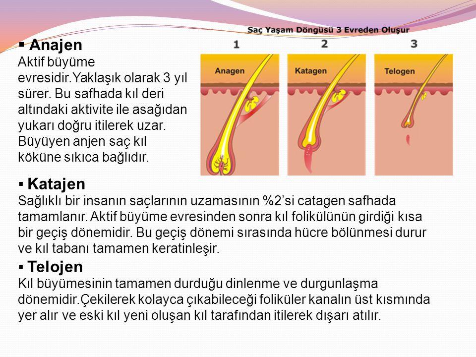  Anajen Aktif büyüme evresidir.Yaklaşık olarak 3 yıl sürer. Bu safhada kıl deri altındaki aktivite ile asağıdan yukarı doğru itilerek uzar. Büyüyen a