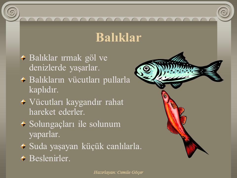 Hazırlayan: Cemile Göçer Balıklar Balıklar ırmak göl ve denizlerde yaşarlar.