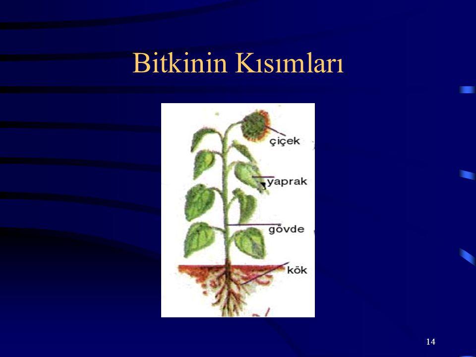 14 Bitkinin Kısımları