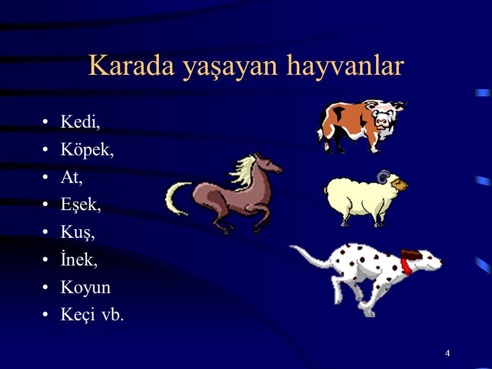 4 Karada yaşayan hayvanlar Kedi, Köpek, At, Eşek, Kuş, İnek, Koyun Keçi vb.