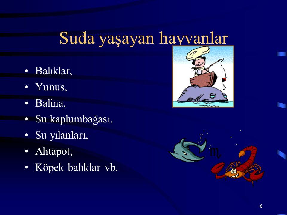 6 Suda yaşayan hayvanlar Balıklar, Yunus, Balina, Su kaplumbağası, Su yılanları, Ahtapot, Köpek balıklar vb.