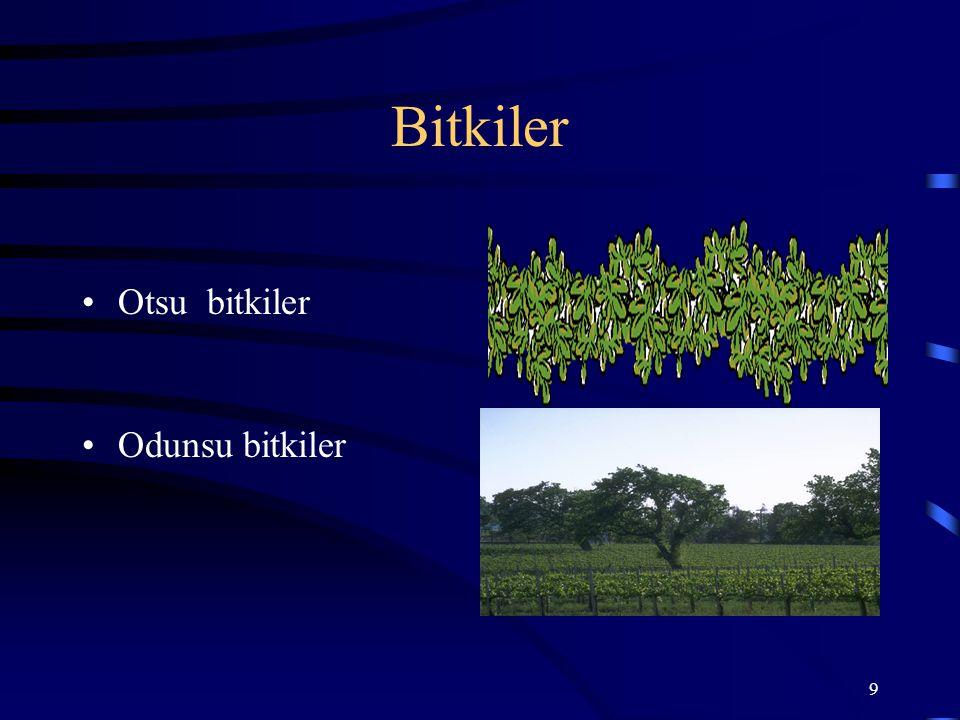 9 Bitkiler Otsu bitkiler Odunsu bitkiler