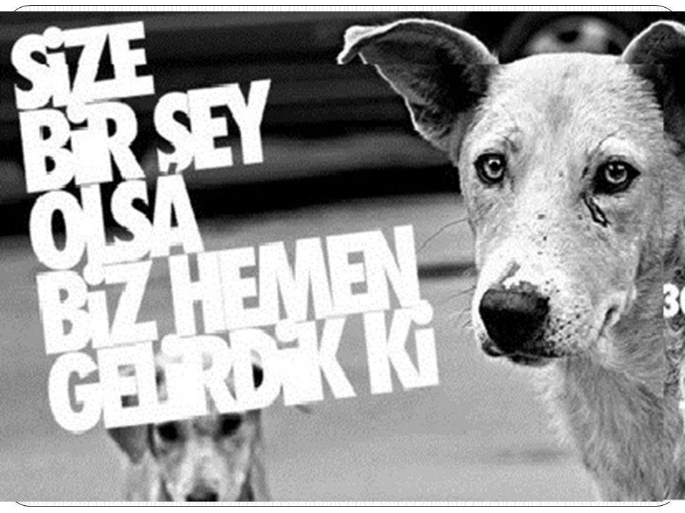 Tüm hayvanların saygı görme hakkı vardır.Bir tür hayvan olan insan, di ğ er hayvanları yok edemez.