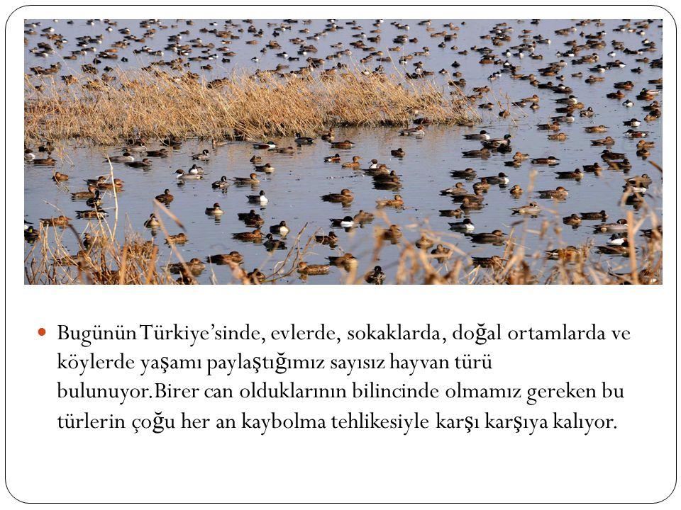 Bugünün Türkiye'sinde, evlerde, sokaklarda, do ğ al ortamlarda ve köylerde ya ş amı payla ş tı ğ ımız sayısız hayvan türü bulunuyor.Birer can olduklarının bilincinde olmamız gereken bu türlerin ço ğ u her an kaybolma tehlikesiyle kar ş ı kar ş ıya kalıyor.