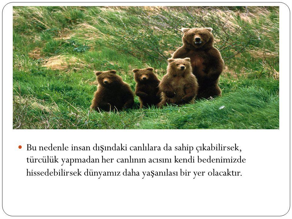 Hayvanların ya ş am hakkı sizin onları sevip sevmemenize ba ğ lı de ğ ildir