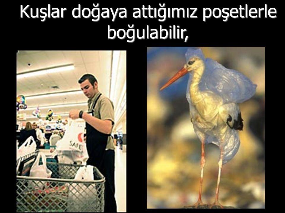 Kuşlar yanlışlıkla yiyerek zarar görür,