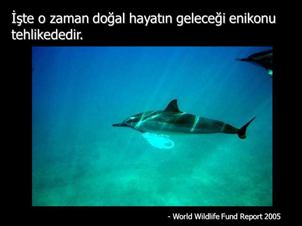 İşte o zaman doğal hayatın geleceği enikonu tehlikededir. - World Wildlife Fund Report 2005