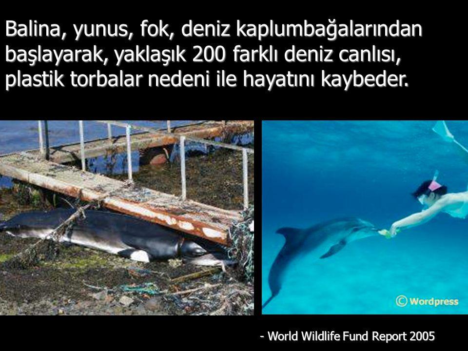 Balina, yunus, fok, deniz kaplumbağalarından başlayarak, yaklaşık 200 farklı deniz canlısı, plastik torbalar nedeni ile hayatını kaybeder.