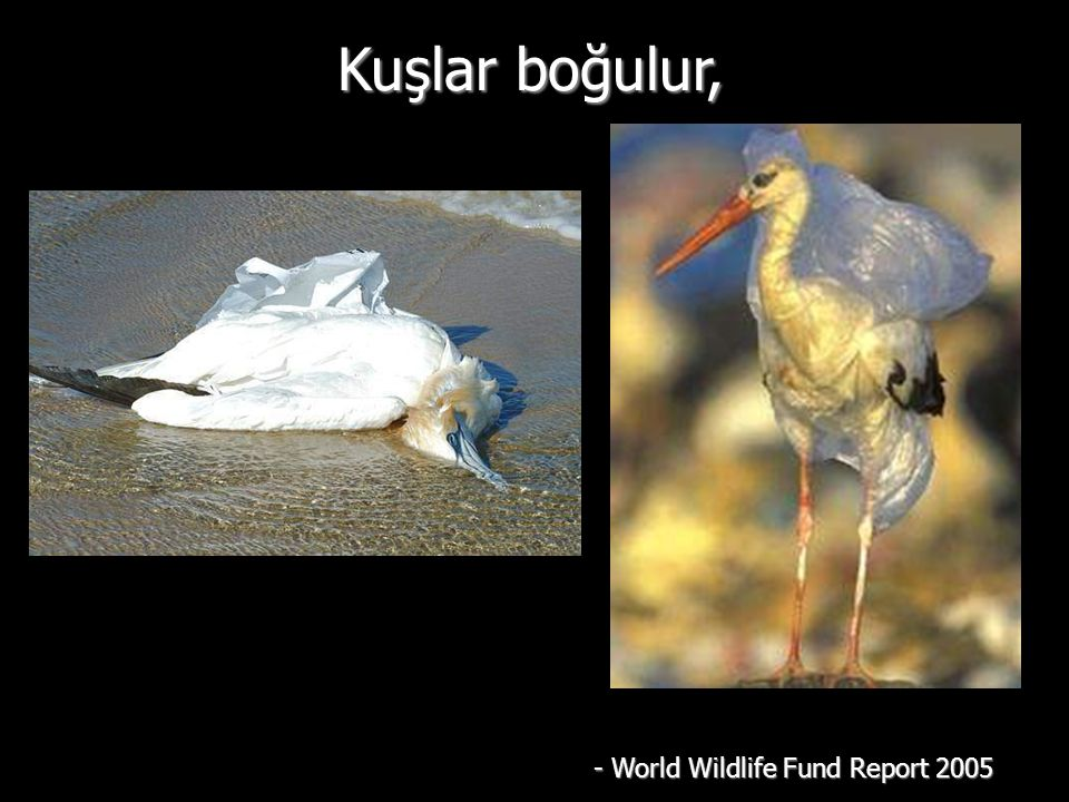 Kuşlar boğulur, - World Wildlife Fund Report 2005