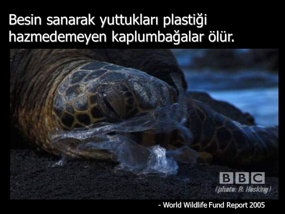 Besin sanarak yuttukları plastiği hazmedemeyen kaplumbağalar ölür. - World Wildlife Fund Report 2005