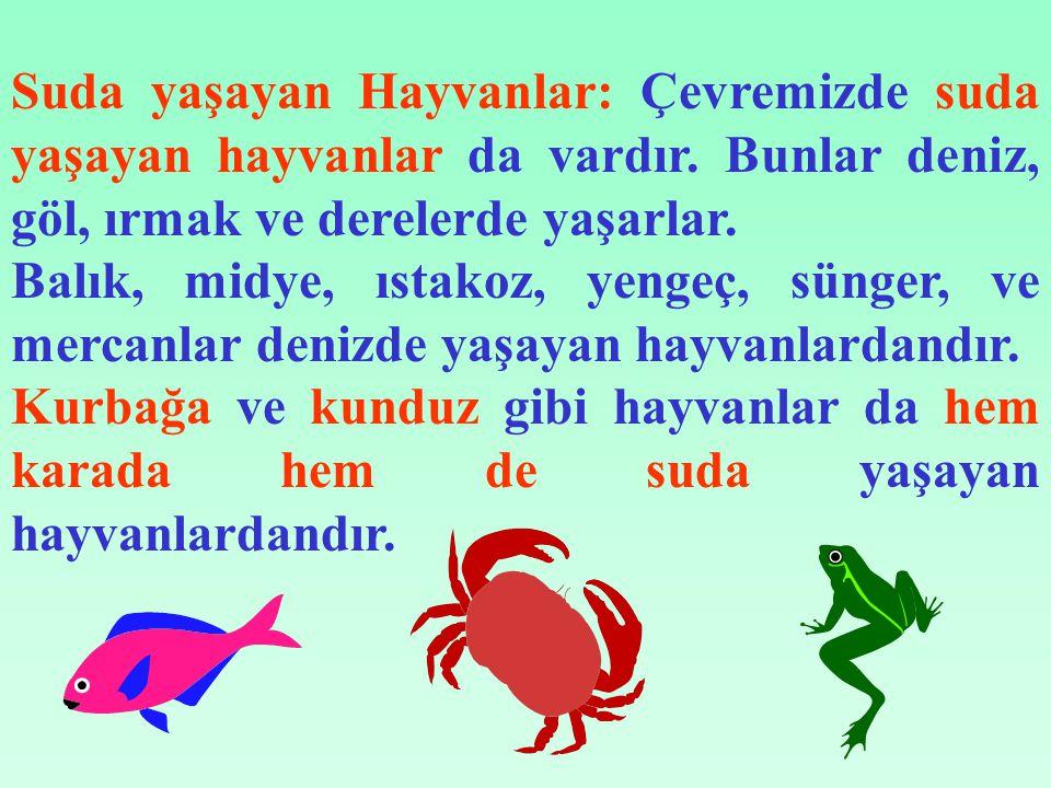 Suda yaşayan Hayvanlar: Çevremizde suda yaşayan hayvanlar da vardır.