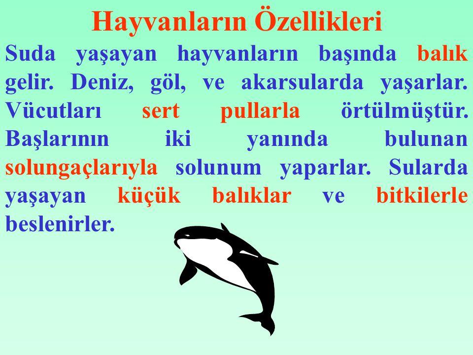 Hayvanların Özellikleri Suda yaşayan hayvanların başında balık gelir.