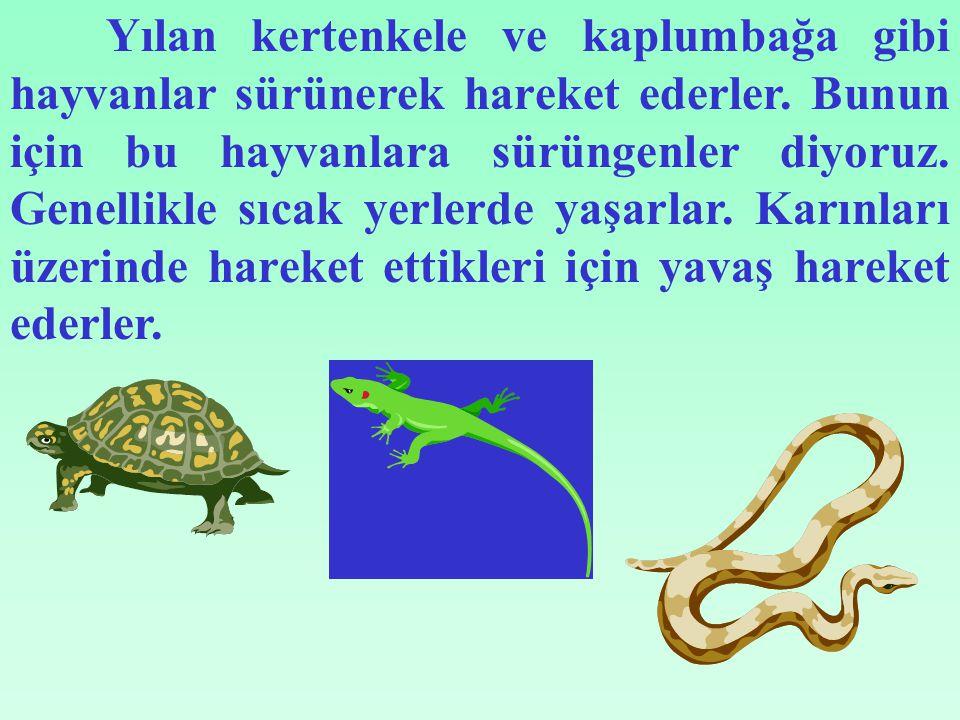 Yılan kertenkele ve kaplumbağa gibi hayvanlar sürünerek hareket ederler.