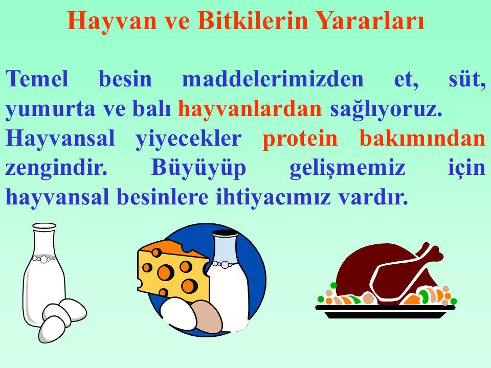Temel besin maddelerimizden et, süt, yumurta ve balı hayvanlardan sağlıyoruz.
