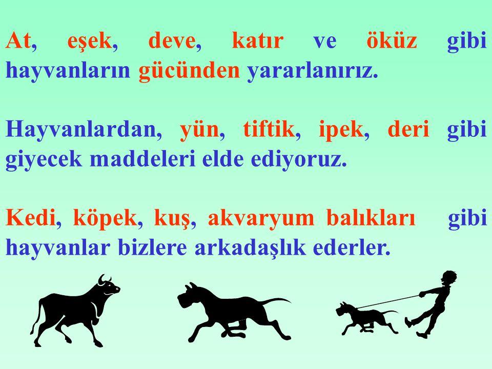 At, eşek, deve, katır ve öküz gibi hayvanların gücünden yararlanırız.