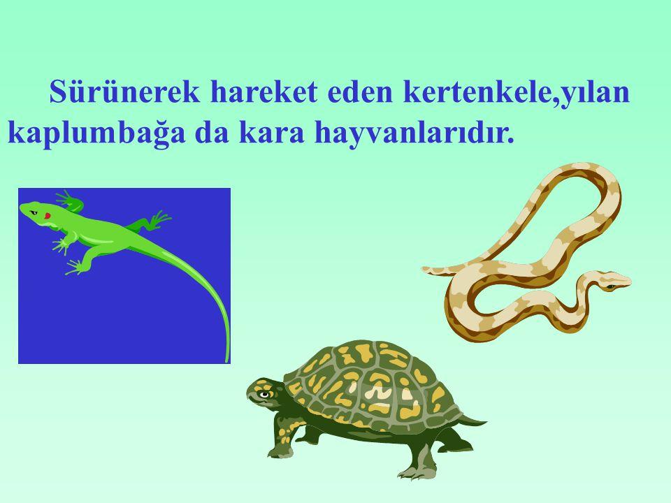 Sürünerek hareket eden kertenkele,yılan kaplumbağa da kara hayvanlarıdır.