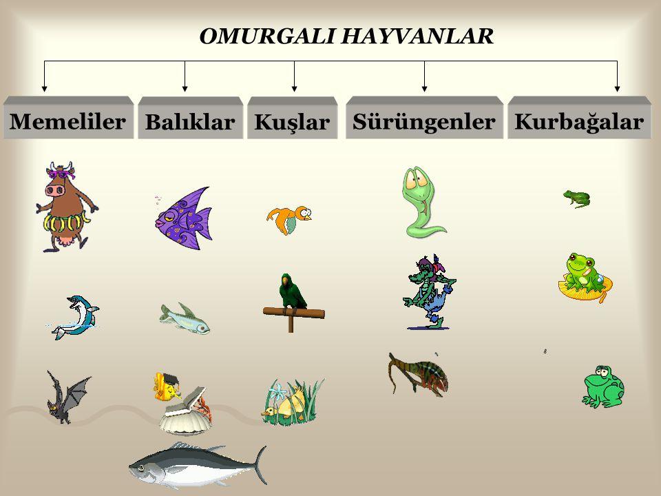 Omurgalı ve Omurgasız Hayvanlar Omurgasız hayvan: İskelet sistemi yoktur.