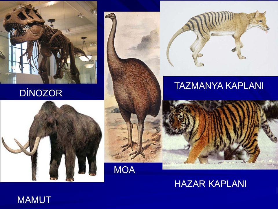 Nesli Tükenen Canlılar: Nesli tükenen türler, nesli tamamen yok olmuş canlı türleridir. Bazı türler doğal afetlerle, bazıları ise insanoğlunun dünyada