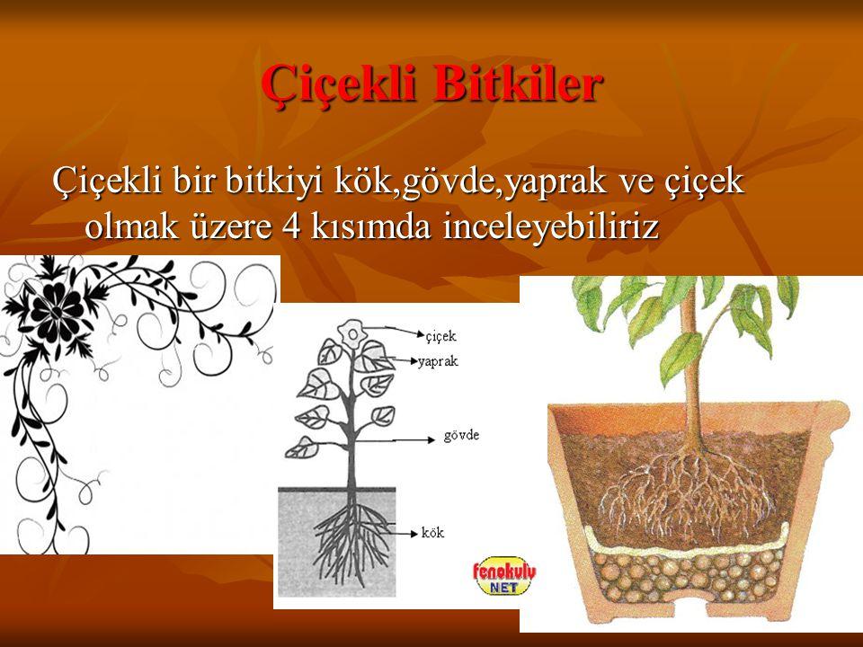 Çiçekli Bitkiler Çiçekli bir bitkiyi kök,gövde,yaprak ve çiçek olmak üzere 4 kısımda inceleyebiliriz