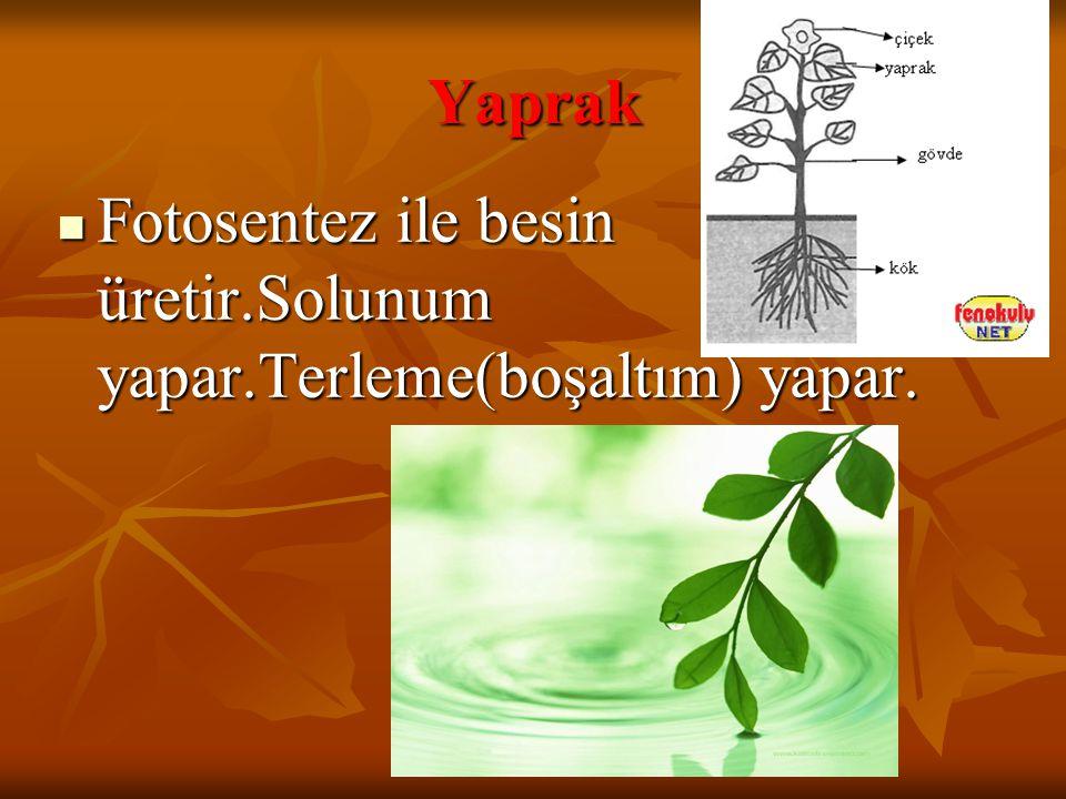 Yaprak Fotosentez ile besin üretir.Solunum yapar.Terleme(boşaltım) yapar. Fotosentez ile besin üretir.Solunum yapar.Terleme(boşaltım) yapar.