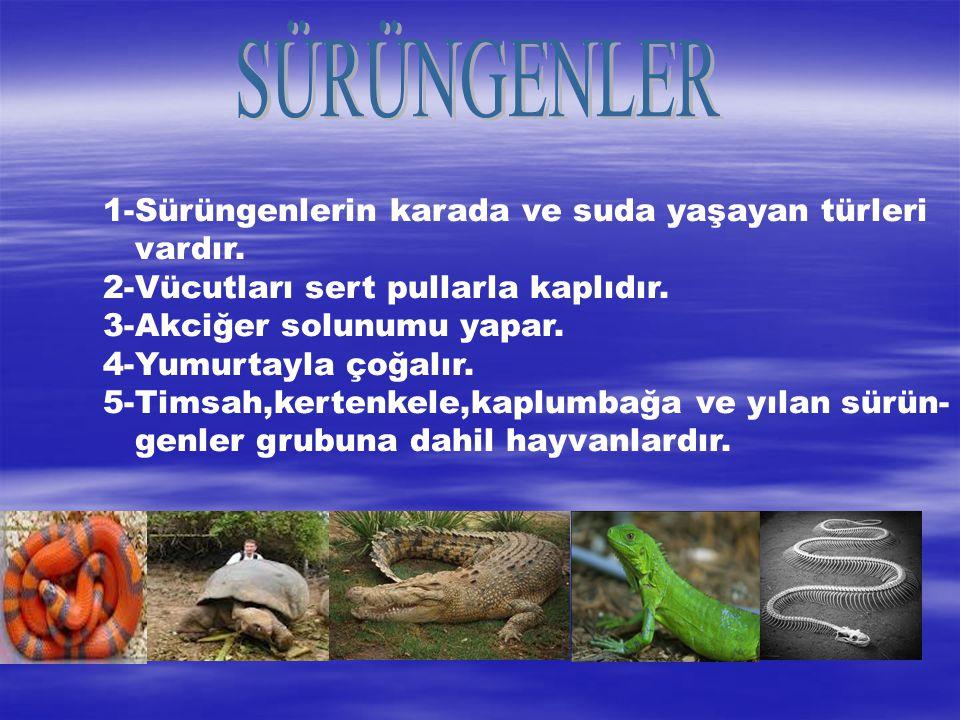 1-Sürüngenlerin karada ve suda yaşayan türleri vardır. 2-Vücutları sert pullarla kaplıdır. 3-Akciğer solunumu yapar. 4-Yumurtayla çoğalır. 5-Timsah,ke